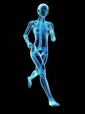 Jogging Photograph - Skeletal System Of A Runner by Sebastian Kaulitzki