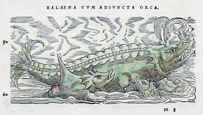 Taxonomy Photograph - 1560 Gesner Orca As Lactating Sea Mammals by Paul D Stewart