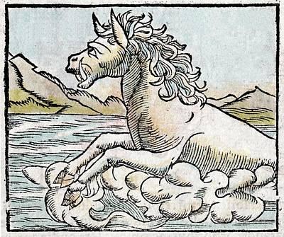 1560 Hippopotamus Tusked Sea Horse Print by Paul D Stewart