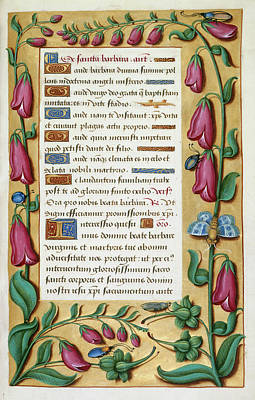 Digitalis Photograph - Book Of Hours by British Library