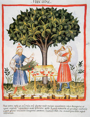Walnut Tree Photograph - Tacuinum Sanitatis, Medieval Health by Prisma Archivo