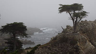 17 Mile Drive Cypress Tree Print by Linda Aiassa