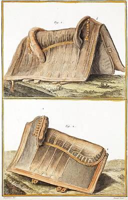 1750 Galapagos Tortoise Saddle Likeness Print by Paul D Stewart
