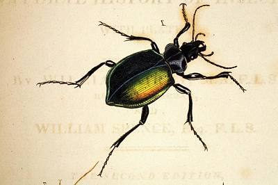Introduction Photograph - 1818 Kirby Spence Carabid Beetle Frontis by Paul D Stewart