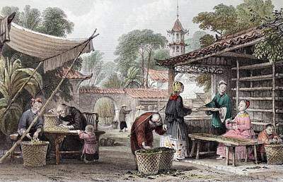 1843 Chinese Silk Silkworm Manufacture Print by Paul D Stewart