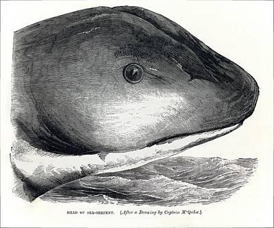 1848 Sea Serpent Monster Hms Daedalus Print by Paul D Stewart