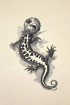 Newts Photograph - 1863 Kingsley Waterbabies Human Newt by Paul D Stewart