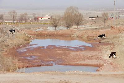 Drought Print by Ashley Cooper