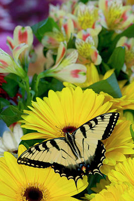 Gerber Daisy Photograph - Eastern Tiger Swallowtail Butterfly by Darrell Gulin