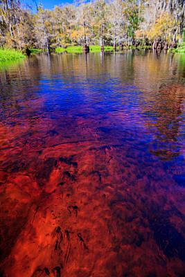 Fisheating Creek Photograph - Fisheating Creek by Jonathan Gewirtz
