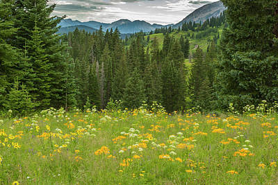 Usa, Colorado, Gunnison National Forest Print by Jaynes Gallery