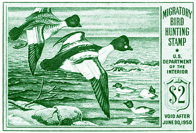Goldeneye Painting - 1949 American Bird Hunting Stamp by Historic Image