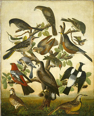 Bunting Painting - 19th Century Birds by Celestial Images