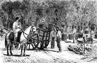 19th Century Coffee Farming Print by Collection Abecasis