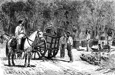 1876 Photograph - 19th Century Coffee Harvest by Collection Abecasis