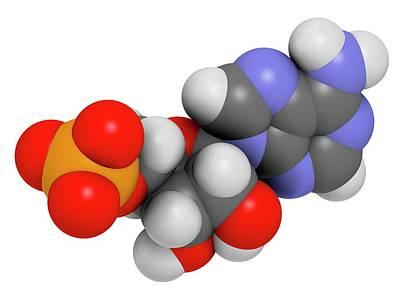 Adenosine Photograph - Adenosine Monophosphate Molecule by Molekuul