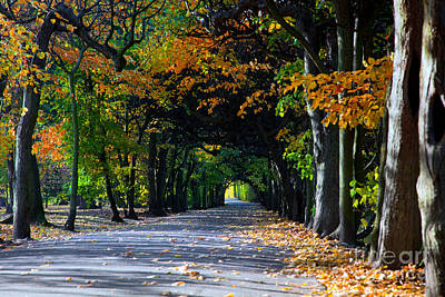 Yellow Photograph - Alley With Falling Leaves In Fall Park by Michal Bednarek