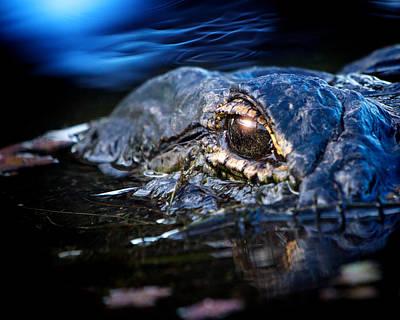 Alligator Photograph - Alligator At Sunrise by Mark Andrew Thomas