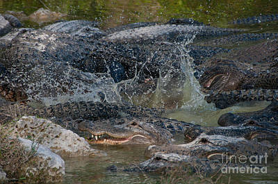 Alligators Print by Mark Newman