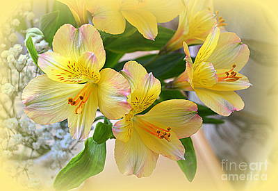 Lily Of The Incas Photograph - Alstroemeria by Bishopston Fine Art