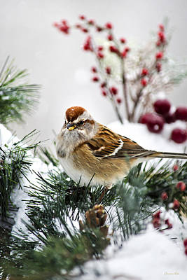 Sparrow Photograph - Christmas Sparrow by Christina Rollo