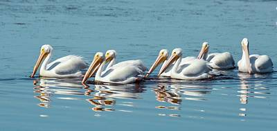 Waterbirds Photograph - American White Pelicans by Bob Gibbons