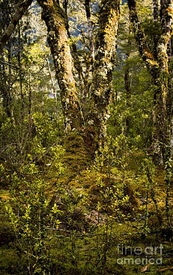 Ancient Woods Print by Tim Hester