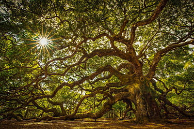 Angel Oak Print by Serge Skiba