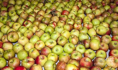 Apples Print by Steven Ralser