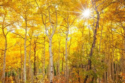 Colorado Mountains Photograph - Aspen Morning by Darren  White