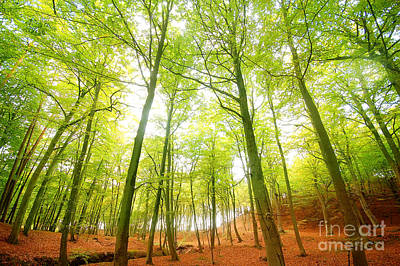 Ground Photograph - Autumn Forest by Michal Bednarek
