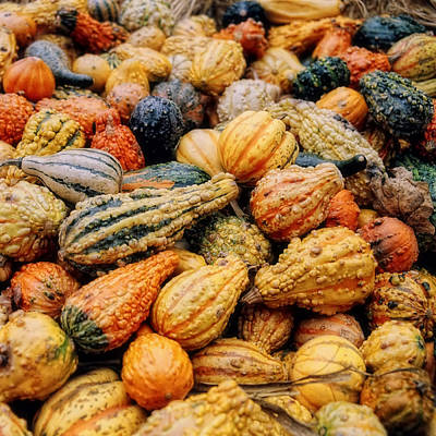 Farm Photograph - Autumn Gourds by Joann Vitali