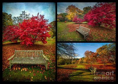 Bush Digital Art - Autumn In The Park by Adrian Evans