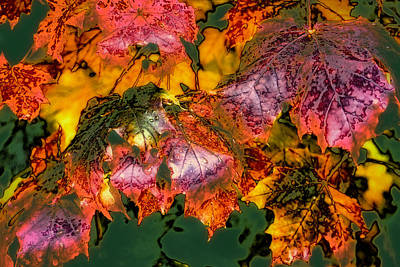 Abstract Photograph - Autumn Leaves by David Patterson