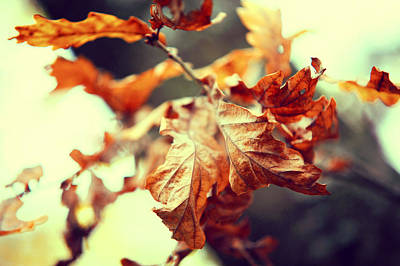 Fading Dream Photograph - Autumn Leaves by Jenny Rainbow