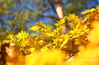 Yellow Photograph - Autumn Leaves by Michal Bednarek