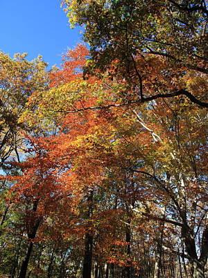 Autumn Trees Print by Frank Romeo