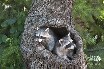 North American Wildlife Photograph - Awaiting Mom by Sandra Bronstein