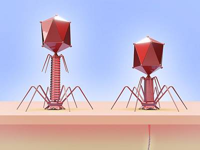 Bacteriophage Infecting E. Coli Bacterium Print by Maurizio De Angelis