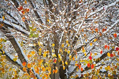 Snow Forts Photograph - Battle Of The Seasons by Annette Hugen