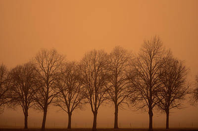 Beautiful Trees In The Fall Print by Toppart Sweden