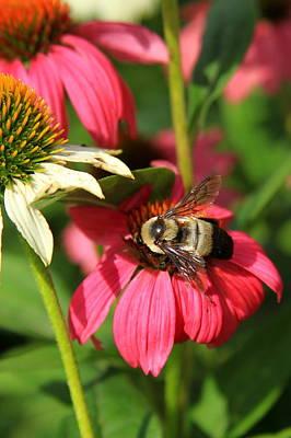 Bee Nice Print by Reid Callaway