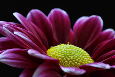 Flower Photograph - Being Me by Juergen Roth