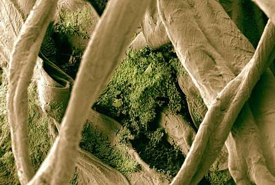 Cleanliness Photograph - Biofilm On Cotton Swab by Ammrf, University Of Sydney