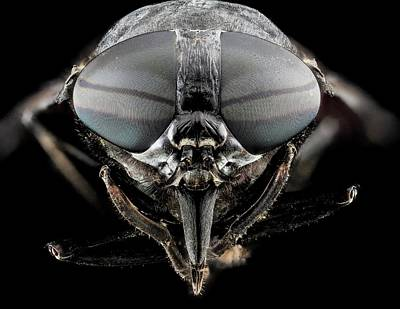 Black Horse Fly Print by Us Geological Survey