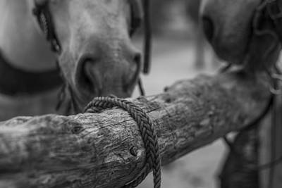 Del Rio Tx Print featuring the photograph Braided Rope by Amber Kresge