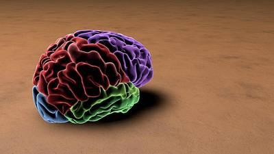 Oblique Photograph - Brain by Sci-comm Studios