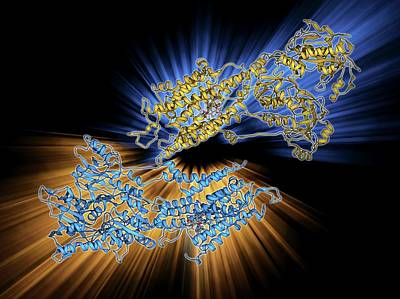 Calcium Photograph - Calcium Pumping Atpase Muscle Enzyme by Laguna Design
