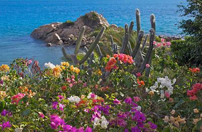 Caribbean Flowers Print featuring the photograph Caribbean Color by Kurt Gustafson