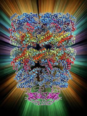 Molecular Model Photograph - Chaperonin Protein Complex by Laguna Design